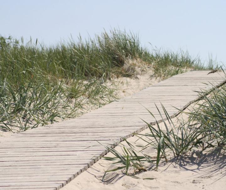 Паланга дорожка к морю